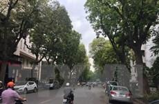 Hà Nội: Di chuyển cây xanh trên phố Trần Hưng Đạo để thi công Ga S12