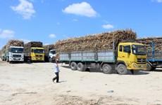 Mía đường Việt Nam nâng cao khả năng cạnh tranh nguyên liệu mía