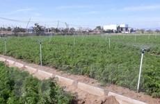 Ninh Thuận: Cây trái xanh mướt mùa khô hạn nhờ hệ thống tưới tự động