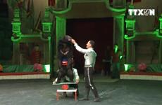 [Video] Liên đoàn Xiếc Việt Nam sẽ giảm xiếc thú hoang dã