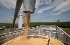 EU: Nông nghiệp không nằm trong thỏa thuận thương mại với Mỹ