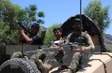 Hàng trăm tay súng IS tại Afghanistan đầu hàng, giao nộp vũ khí