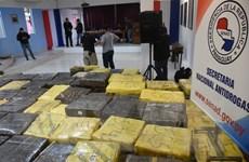 Paraguay thu giữ 8 tấn cần sa chuẩn bị được đưa sang Brazil