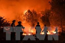 Mỹ: Cháy rừng tiếp tục bùng phát và lan rộng ngoài sự kiểm soát
