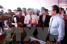 Nhãn lồng đưa Hưng Yên trở thành 'ngôi sao' về thu-chi ngân sách