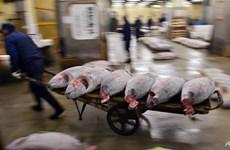 """Nhật Bản: Chợ đấu giá cá ngừ nổi tiếng """"điêu đứng"""" vì nắng nóng"""