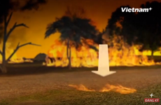 [Videographics] Cháy rừng - Thảm họa khủng khiếp đe dọa mọi quốc gia