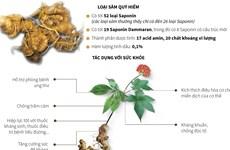 [Infographics] Loại sâm tốt nhất thế giới chỉ có ở Việt Nam