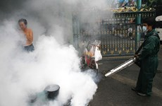 Dịch sốt xuất huyết lan rộng tại thủ đô Bangkok của Thái Lan