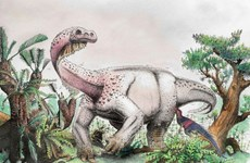 Phát hiện hóa thạch loài khủng long mới sống cách đây 200 triệu năm