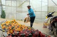 Nguyên nhân đằng sau việc Malaysia ngừng nhập khẩu ớt từ Việt Nam