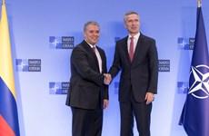 Colombia và NATO tăng cường hợp tác chống tội phạm mạng