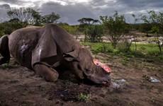 [Video] Những loài động vật đang dần biến mất khỏi Trái Đất