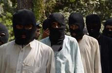 Phiến quân Taliban xác nhận gặp phái viên Mỹ về Afghanistan