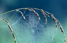 [Video] Tơ nhện mỏng manh nhưng đủ mạnh để dừng cả đoàn tàu đang chạy
