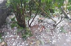 Các trận mưa đá bất ngờ xuất hiện liên tiếp tại tỉnh Điện Biên