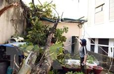 Lốc xoáy bất thường tại Tuyên Quang, hư hại nhiều nhà cửa và hoa màu