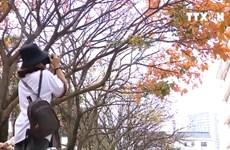 [Video] Hà Nội đẹp đến xao xuyến trong mùa cây thay lá