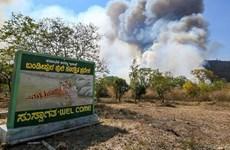 Cháy khu bảo tồn hổ Bandipur của Ấn Độ, nhiều con vật không chạy thoát