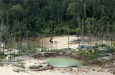 Peru lập căn cứ quân sự tại Amazon để đối phó nạn phá rừng
