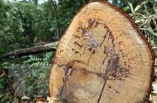 Lại phát hiện một vụ phá rừng nghiêm trọng ở Quảng Bình