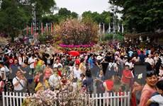Lễ hội hoa Anh đào Nhật Bản-Hà Nội 2019 kéo dài thêm 1 ngày