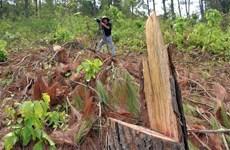 [Video] Lâm tặc phá rừng ngay nơi đóng quân của cảnh sát cơ động