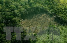 Brazil đứng đầu các nước bị chặt phá rừng nghiêm trọng nhất thế giới