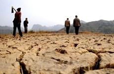 Triều Tiên đang đối mặt với tình trạng hạn hán nghiêm trọng