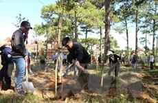 Quảng Ngãi đầu tư gần 8 tỷ đồng trồng rừng nguyên liệu gỗ lớn