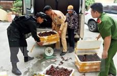 Lạng Sơn siết chặt quản lý nhập khẩu, buôn bán 2 loài tôm ngoại lai