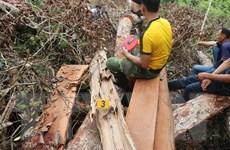 Bắc Kạn: Điều tra vụ phá rừng nghiêm trọng tại huyện Bạch Thông