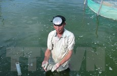 Lợi ích kinh tế từ việc nuôi kết hợp hải sâm với các sinh vật khác