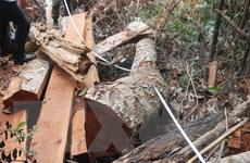 Truy cứu trách nhiệm vụ phá rừng nghiêm trọng tại Bắc Kạn