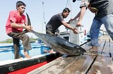 Chuyện cá ngừ và tuyên bố gây tranh cãi của quan chức Indonesia