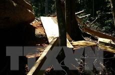 Khởi tố, bắt tạm giam đối tượng khai thác gỗ trái phép tại Gia Lai