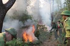 Hà Tĩnh: Lại xảy ra cháy rừng thông và keo tràm tại núi Nầm