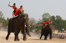 [Video] Kỳ thú lễ hội đua voi có một không hai ở Việt Nam