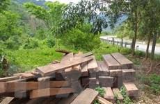 Quảng Bình: Lâm tặc táo tợn tấn công, một cán bộ kiểm lâm đi cấp cứu