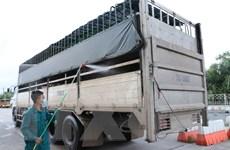 Tây Ninh phòng chống dịch tả lợn châu Phi lây lan qua biên giới