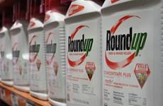 Nhiều bằng chứng khẳng định thuốc diệt cỏ của Monsanto gây ung thư