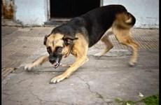 [Video] Những điều cần biết để tránh mối nguy hiểm bị chó cắn