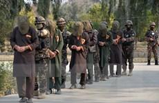 Afghanistan không kích Taliban, tiêu diệt ít nhất 15 phiến quân