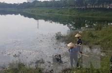 Hà Nội: Cá chết nổi trắng hồ Yên Sở, mùi hôi thối lan rộng