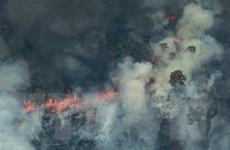 Lời cảnh báo khẩn cấp từ Amazon - 'lá phổi xanh' của Trái Đất