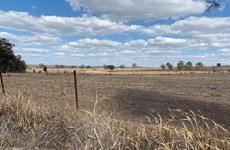 Nông nghiệp Australia thiệt hại do hạn hán và căng thẳng thương mại