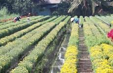 Đồng Tháp chuẩn bị 2-3 triệu giỏ hoa phục vụ thị trường Tết 2020