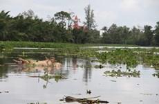 Bến Tre: Nguồn nước ô nhiễm vì xác lợn chết nổi đầy kênh Tự Chảy