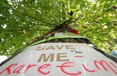 Hơn 50% số loài cây bản địa châu Âu có nguy cơ tuyệt chủng