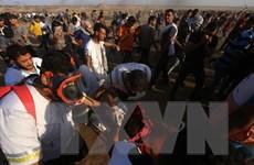 Hơn 60 người Palestine bị thương do đụng độ với binh sỹ Israel